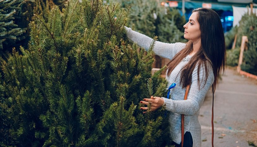 Spinneys launches real Christmas tree range in Dubai - Dubaisavers