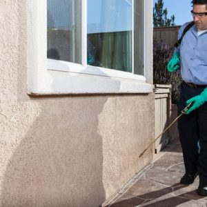 Al Zara Pest Control Services