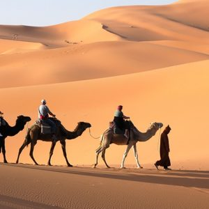 Emirates Knight Tours