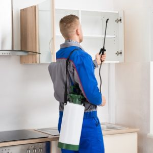 Greenset Pest Control and Cleaning Services