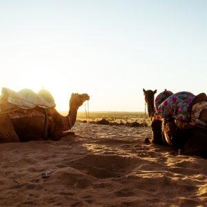 Royal Desert Tours