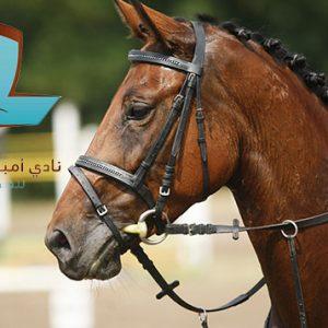 ambition equestrian