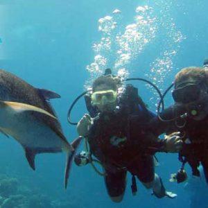 orca-scuba