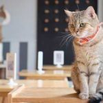 Ailuromania Cat Cafe