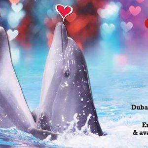 Dubai Dolphinarium Valentine's day offer - Dubaisavers