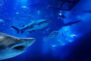 Get 25% off shark diving at Dubai Aquarium - Dubaisavers
