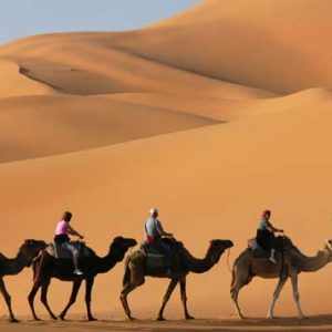 Desert Safari Packages with Transportation from Tawoos Tours - Dubaisavers