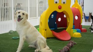 Pet Station Kennels & Cattery offer - Dubaisavers
