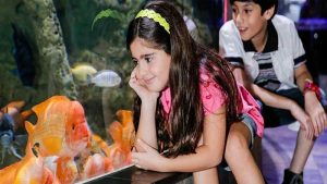 Dubai Aquarium and Underwater Zoo Ticket