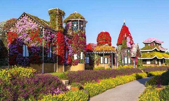 Dubai Miracle Garden Offers And Promotions Dubaisavers Com