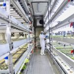 Dubai's First In-store Hydroponic Farm opens at Carrefour - Dubaisavers