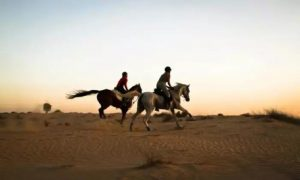 Desert Horse Riding at AL Dhabi Horses & Camels Rental - Dubaisavers