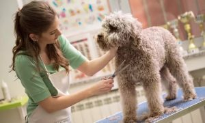Cat or Dog Grooming Package at Clip and Dip Pet Grooming - Dubaisavers
