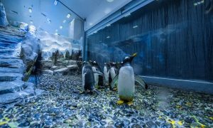 Entry to Dubai Aquarium and Penguin Cove at Dubai Aquarium and Underwater Zoo - Dubaisavers