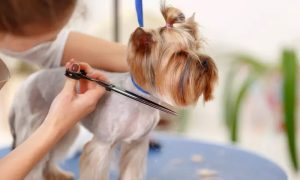 Full Grooming Package, Bathe and Dry, or Deshedding for Cat or Dog at Family Pets Trading - Dubaisavers