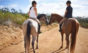 Up to Five 30-Minute Horse Riding Lessons from Hobbies Club - Dubaisavers