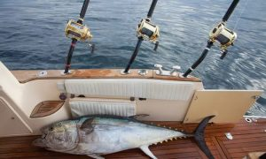 Private Four-Hour Fishing Trip with Optional Barbecue with King Fisher Tours - Dubaisavers