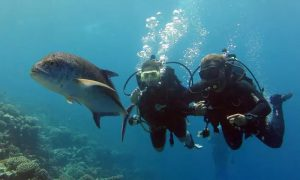 Scuba Diving Experience at Orca Diving Center - Dubaisavers