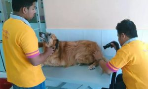 Full Grooming for a Cat or Dog Toilet Training for a Dog at Paws and Whiskers Pets Nursery - Dubaisavers