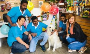 One- or Seven-Night Kennel Boarding at Paws and Whiskers Pets Nursery - Dubaisavers