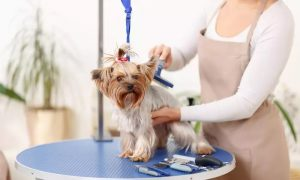 Dog or Cat Grooming Package at Pet Lounge Veterinary Clinic - Dubaisavers