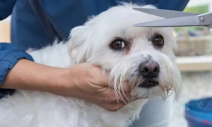 Full Grooming for Small-to-Large Dog or Bird, Short- or Long-Haired Cat, Rabbit or Guinea Pig at Unique Pets - Dubaisavers