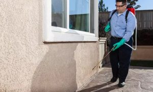 Choice of Pest Control Service - Dubaisavers