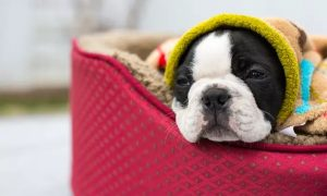 Dog Grooming, Training or Canine First Aid Online Course from Centre of Excellence - Dubaisavers