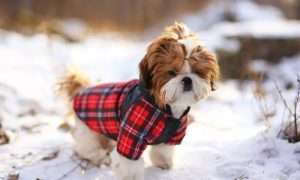 Clothes and Crafts for Your Pets Course at International Open Academy - Dubaisavers