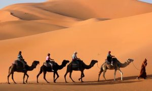 VIP Safari with Red Dunes Tourism - Dubaisavers