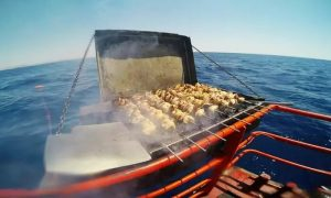 Yacht Cruise with Barbecue with Royal Blue - Dubaisavers