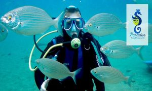 Diving in Dubai or Fujairah at Paradise Blue Diving & Snorkeling Club - Dubaisavers