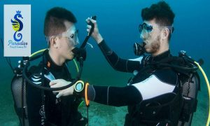CMAS and PADI Courses at Jumeirah Beach from Paradise Blue Diving & Snorkeling Club - Dubaisavers