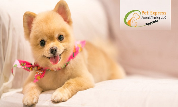 Pet Grooming for Cats, Small and Big Dogs by Pet Express Animals Trading LLC - Dubaisavers