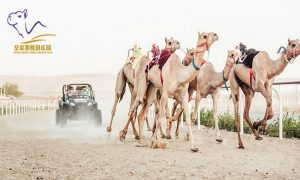 Royal Camel Racing Club Tickets by Royal Camel Sports Management Company LLC - Dubaisavers