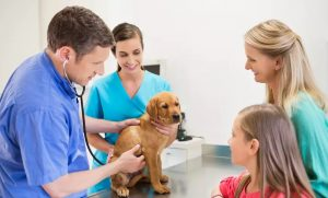 Choice of Pet Check-Up at Canadian Veterinary Clinic Dubai - Dubaisavers
