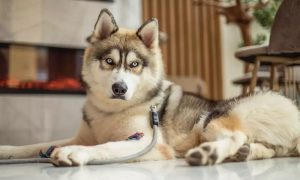 Full Grooming Service for a Cat or Dog at Mesho Pet Grooming Salon - Dubaisavers